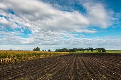 Fields and meadows. Green fields, meadows and forests with bright sky and clouds Stock Image
