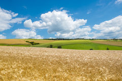 Fields, meadows, clouds. Landscape with golden wheat fields and green meadows in Germany Stock Images