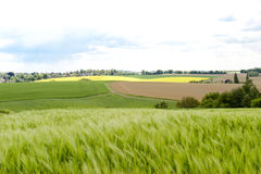 Grain Fields. Landscape with fields and meadows in Germany Stock Photos