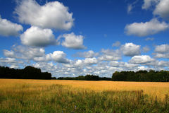Fields and meadows. Landscape with fields and meadows in Germany royalty free stock image