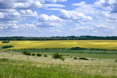 Fields and meadows, Russia Royalty Free Stock Images