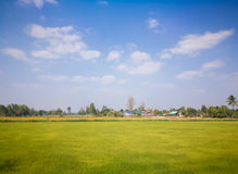 Fields and meadows in the summer Royalty Free Stock Photo