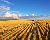 The fields of Montana Royalty Free Stock Image