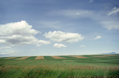 Fields in Montana Stock Image