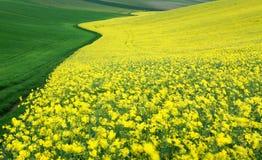 fields moravian Стоковое фото RF