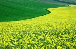 fields moravian Стоковое Изображение