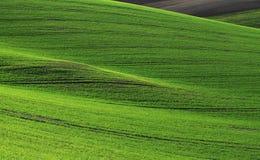 fields moravian Стоковые Фотографии RF
