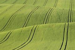 fields moravian Arkivfoto