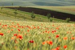 fields moravian Arkivfoton