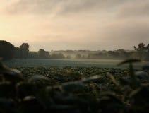 fields morgon Fotografering för Bildbyråer