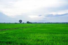 fields morgon Royaltyfri Foto