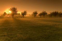 Fields in the morning Stock Image