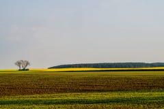 Fields in morning light Stock Images