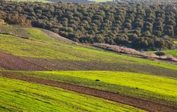 Fields in Morocco Royalty Free Stock Photos
