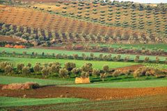 Fields in Morocco Stock Photos