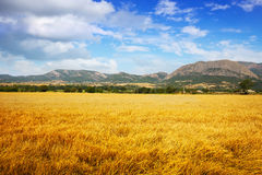 Fields at mountain valley Stock Photo