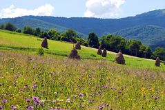 The fields are in mountains. The fields are in Carpathian mountains stock images
