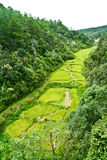 Fields, the mountains. View from a mountain valley in Thailand Stock Image