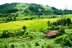 Fields, the mountains. Mountain valley in Thailand. Thatched house Royalty Free Stock Photography