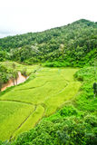 Fields, the mountains. Green rice fields, river and mountains Royalty Free Stock Photo