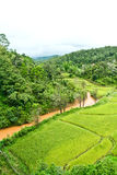 Fields, the mountains. Green rice fields, river and mountains Royalty Free Stock Images