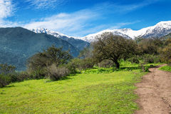 Fields and mountains. Green fields, blue skies and beautiful mountains in Chile Stock Photos