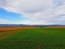 Fields and the mountains as background. Green and cereal fields and the mountains as background in the summer Royalty Free Stock Photo