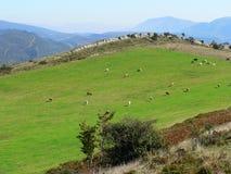 Fields and mountains, Burgos ( Spain ) Stock Photos