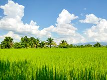 Fields, mountains and clouds on the weather's fine. royalty free stock photography