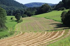 Wheat fields in the mountains of Germany, Hettigenbeuern Stock Images