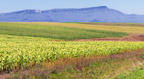 Fields mountains landscape. Agriculture landscape with fields of different colors and mountains as a background Royalty Free Stock Photography