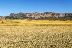 Fields in the mountains of Soria Stock Photo