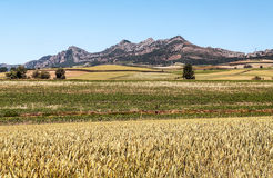 Fields in the mountains of Soria. With mountains in Spain on a sunny day Stock Photo