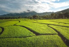Fields in Nan Thailand nature outdoor landscape at Tanong homestay. In Thailand Royalty Free Stock Photography