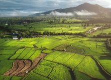 Fields in Nan Thailand nature outdoor landscape at Tanong homestay. In Thailand Stock Image