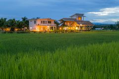 Fields in Nan Thailand nature outdoor landscape at Tanong homestay. In Thailand Stock Photo
