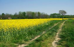 fields naturvägen till treen Arkivbild