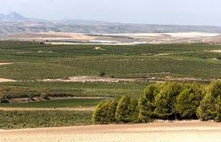 Fields of Navarra Stock Photography