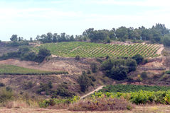 Fields of Navarra Stock Image