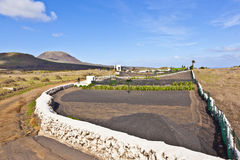 Fields near Haria at Lanzarote island in Spain Royalty Free Stock Photography