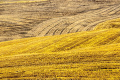 Fields near Montalcino (Tuscany) Royalty Free Stock Photo