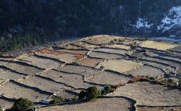 Fields in Nepal Royalty Free Stock Photo