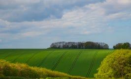 fields ner grönt övre Royaltyfri Bild