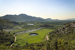 Fields of Neretva Royalty Free Stock Image