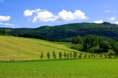 Fields in Norway Royalty Free Stock Image