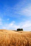 fields oaten arkivfoton