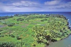 Fields by the Ocean in Oahu, Hawaii Stock Image