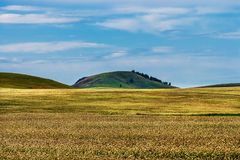 Free Fields Of Buckwheat In The Altai Mountains Stock Photo - 124876620