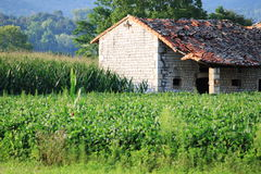 Fields and old house Royalty Free Stock Image