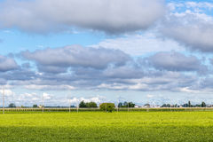 Fields and orchards under a cloudy sky Stock Photography